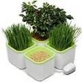 Проращиватели семян и домашняя гидропоника