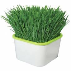 """Проращиватель """"Здоровья Клад"""" (для микрозелени)"""